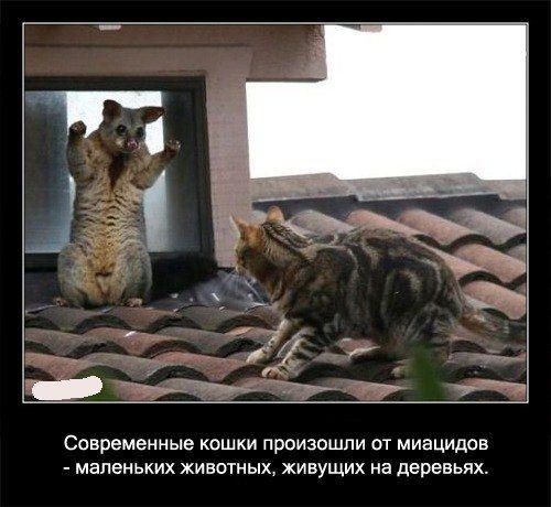 Современные кошки произошли от миациадов - маленьких животных,   живущих на деревьях
