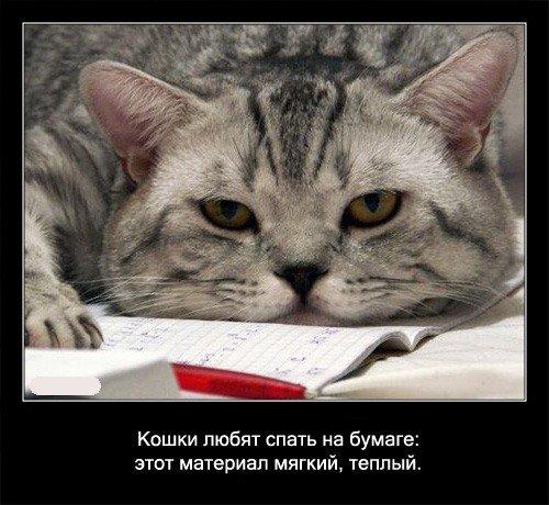 Кошки любят спать на бумаге: этот материал мягкий и теплый.