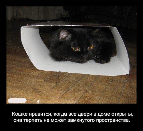 Кошке нравится, когда все двери в   доме открыты, она терпеть не может замкнутого пространства.