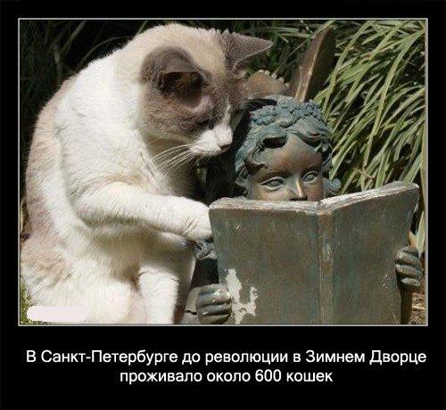 В Санкт-Петербурге до революции в Зимнем Дворце проживало   около 600 кошек.
