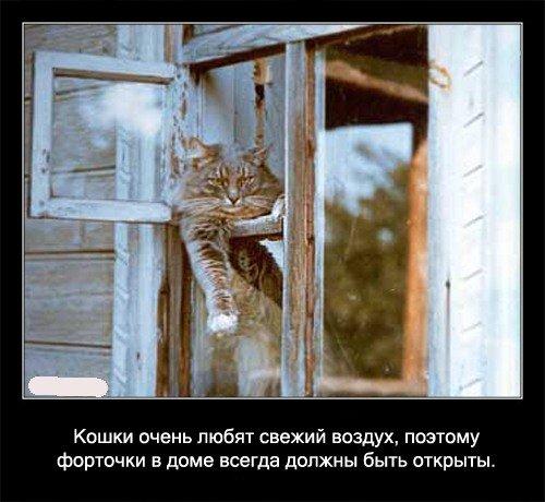 Кошки очень любят свежий воздух, поэтому   форточки в доме всегда должны быть открыты.