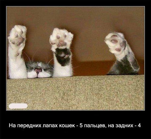 На передних лапах   кошек - 5 пальцев, на задних - 4