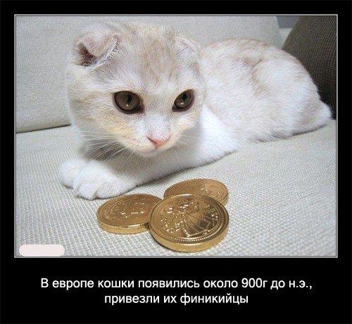 В Европе кошки появились около 900 года до нашей эры,   привезли их финикийцы