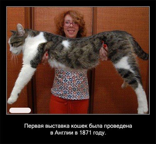 Первая выставка кошек была проведена в Англии в 1871 году.