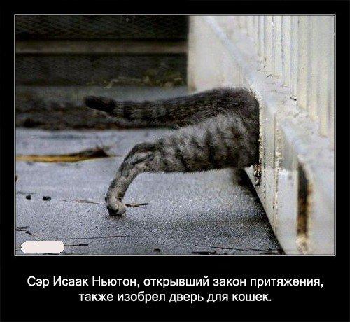 Сэр Исаак Ньютон, открывший закон притяжения, также изобрел   дверь для кошек.