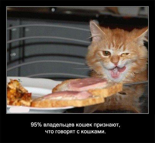 95% владельцев   кошек признают, что говорят с кошками.