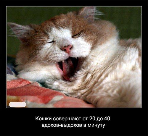 Кошки   совершают от 20 до 40 вдоход-выдохов в минуту