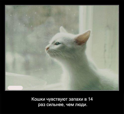 Кошки   чувствуют запахи в 14 раз сильнее, чем люди.