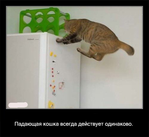 Падающая кошка   всегда действует одинаково.