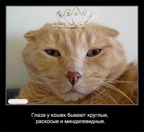 Глаза у кошек бывает круглые, раскосые и миндалевидные.