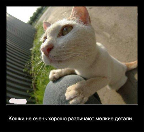 Кошки не   очень хорошо различают мелкие детали.