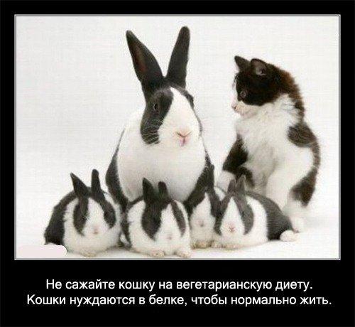 Не сажайте кошку на вегетарианскую диету. Кошки   нуждаются в белке, чтобы нормально жить.