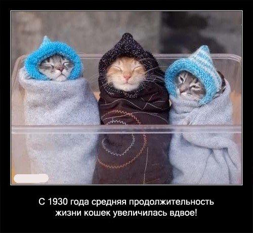 С 1930 года средняя продолжительность жизни кошек увеличилась   вдвое!