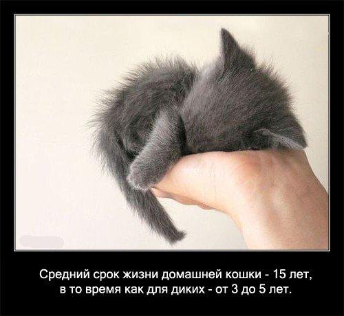 Средний срок жизни домашней кошки - 15 лет,   в то время как для диких - от 3 до 5 лет.