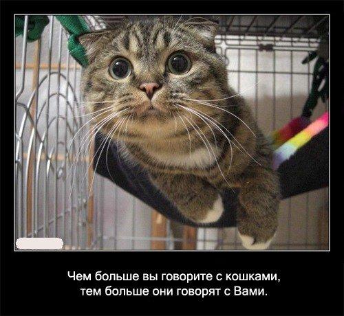 Чем   больше Вы говорите с кошками, тем больше они говорят с Вами.
