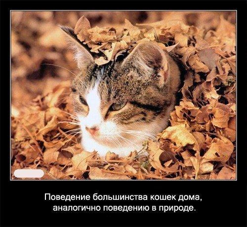 Поведение большинства кошек дома, аналогично поведению в   природе.