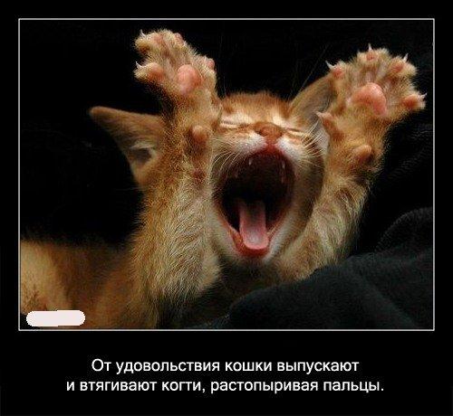 От   удовольствия кошки выпускают и втягивают, растопыривая пальцы.