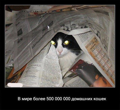В мире более 500 000 000   домашних кошек.