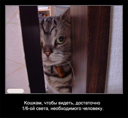 Кошкам, чтобы видеть, достаточно 1/6-ой света,   необходимого человеку.