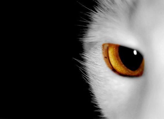 коты инопланетяне